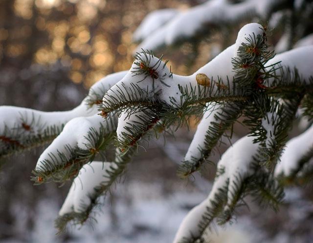 Photo 365 Pine