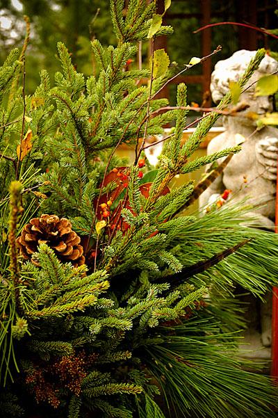 Raw Food Pine